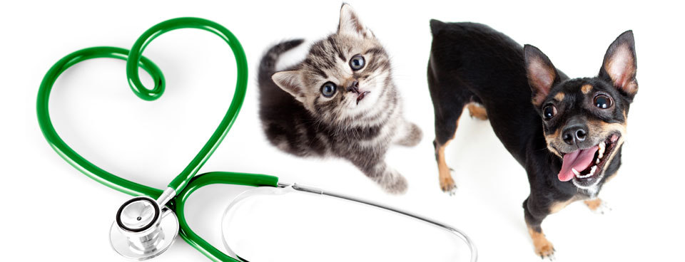 Emergency Care for Pet Illness or Injury